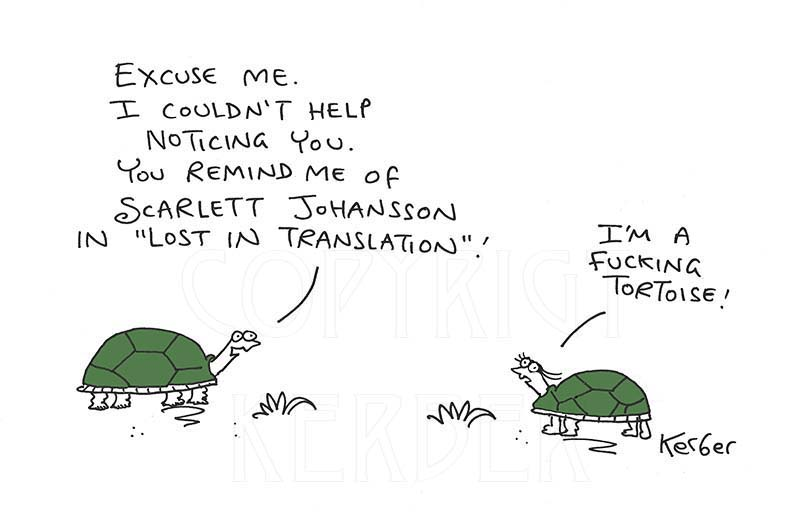 Tortoise by Neil Kerber